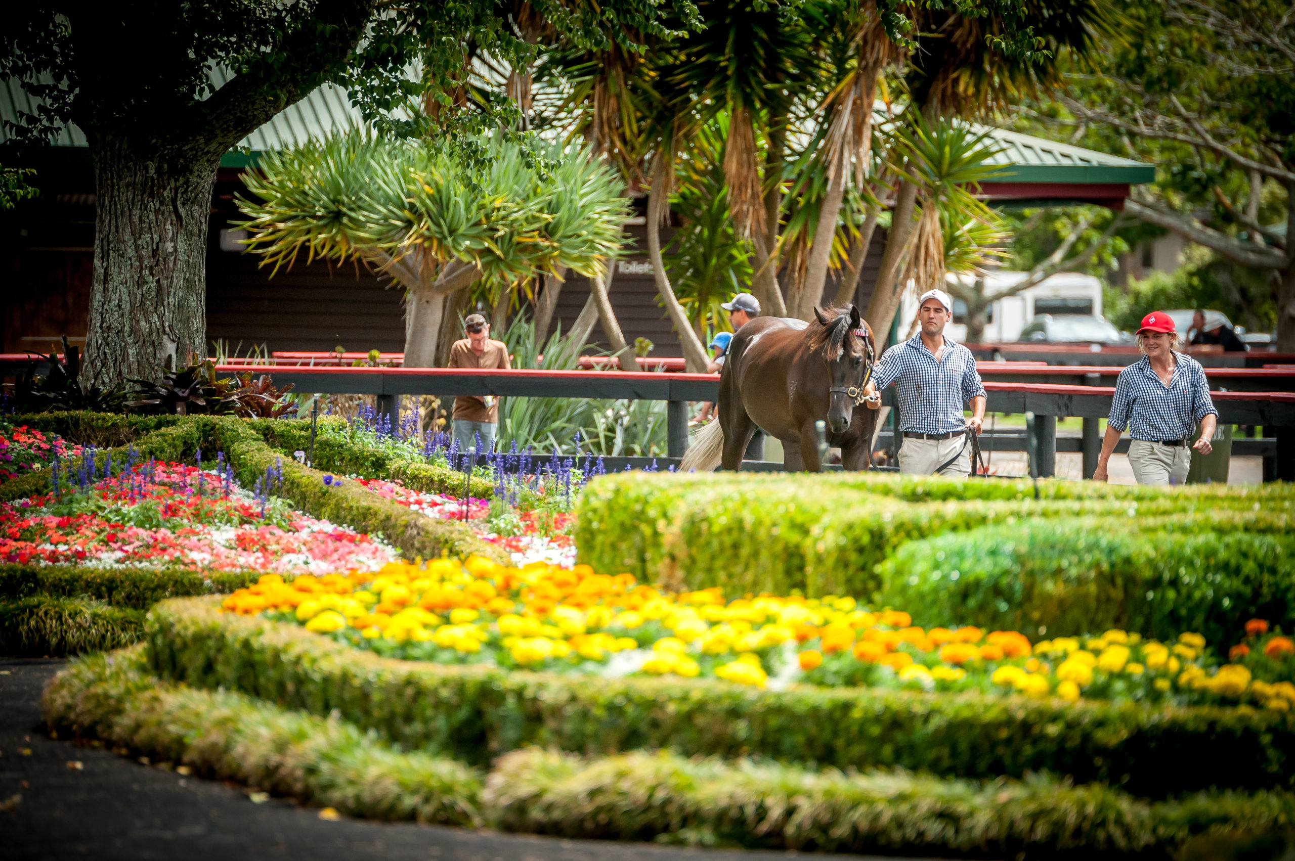 Valachi Downs - Misc - Outdoor Parade Ring Gardens